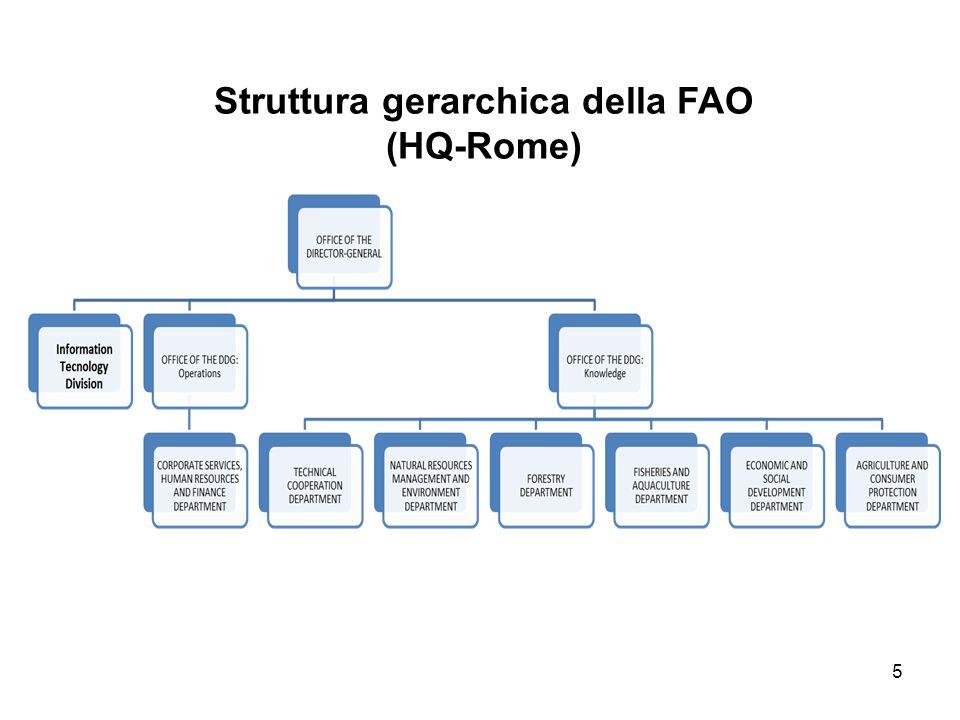 5 Struttura gerarchica della FAO (HQ-Rome)