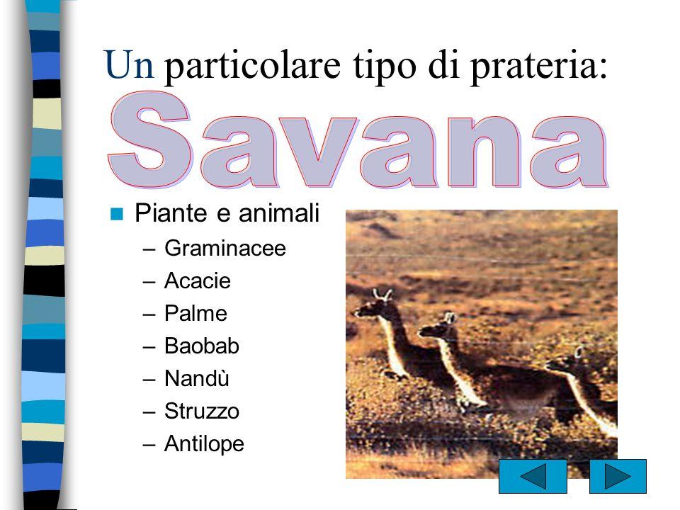 Piante e animali –Praterie –Steppe –Veld –Pampas –Asino –Cavallo –Gazzella –Bisonte –Antilope