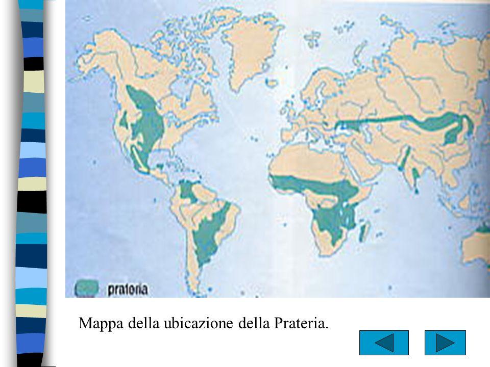 Un particolare tipo di prateria: Piante e animali –Graminacee –Acacie –Palme –Baobab –Nandù –Struzzo –Antilope