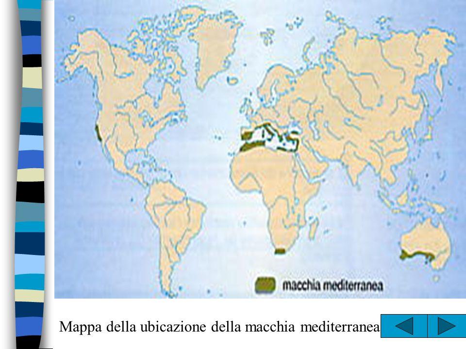 Piante e animali –Lulivo –Agrumi –Fico –Mandorlo –Alloro –Leccio –Eucalipto –Quercia da sughero –Lupo –Capriolo –Cinghiale –Istrice –Muflone