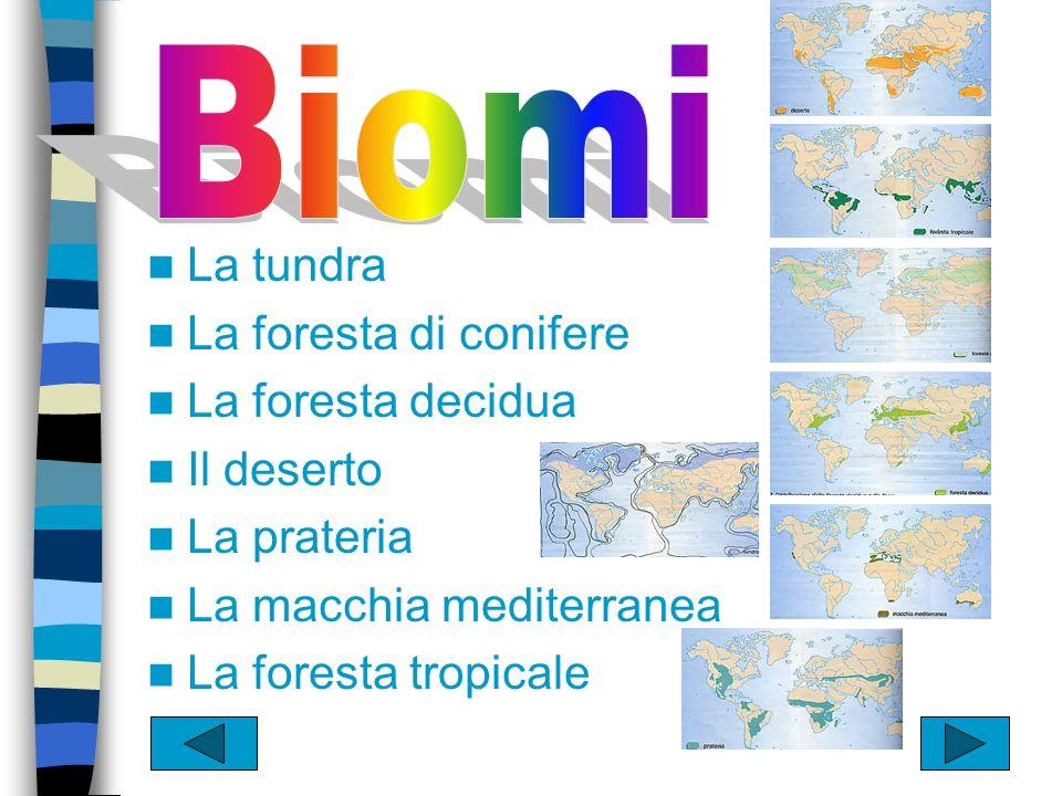 Mappa della ubicazione dei BIOMI