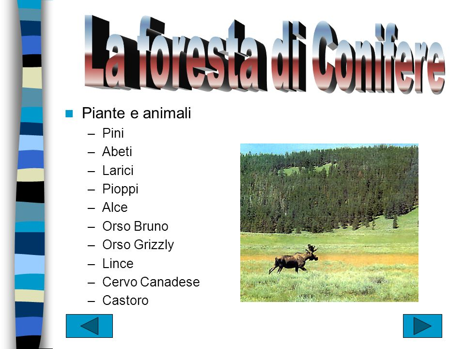 La tundra La foresta di conifere La foresta decidua Il deserto La prateria La macchia mediterranea La foresta tropicale