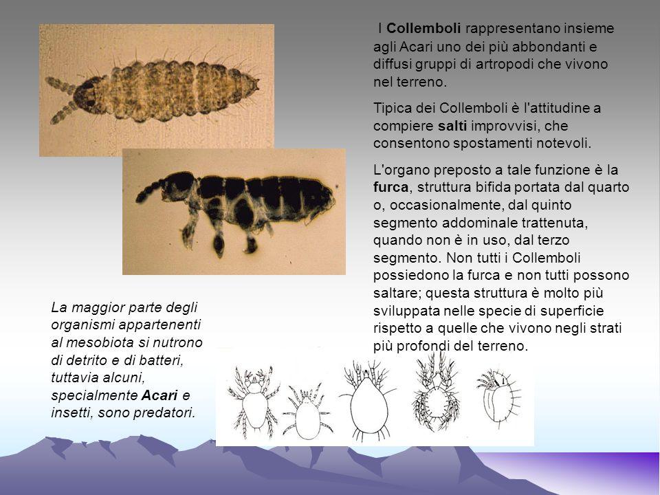 La maggior parte degli organismi appartenenti al mesobiota si nutrono di detrito e di batteri, tuttavia alcuni, specialmente Acari e insetti, sono pre