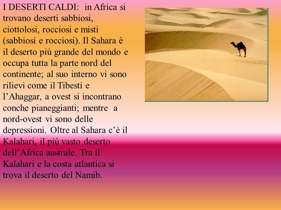 I DESERTI CALDI: in Africa si trovano deserti sabbiosi, ciottolosi, rocciosi e misti (sabbiosi e rocciosi). Il Sahara è il deserto più grande del mond
