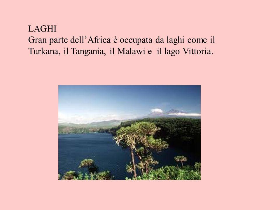 LAGHI Gran parte dellAfrica è occupata da laghi come il Turkana, il Tangania, il Malawi e il lago Vittoria.