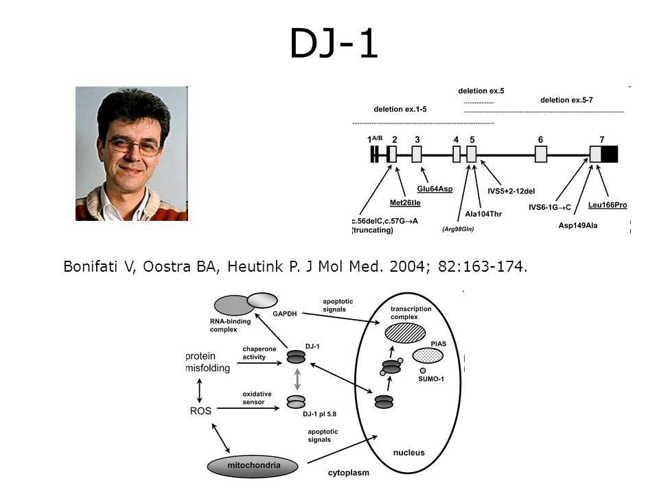 DJ-1 Bonifati V, Oostra BA, Heutink P. J Mol Med. 2004; 82:163-174.