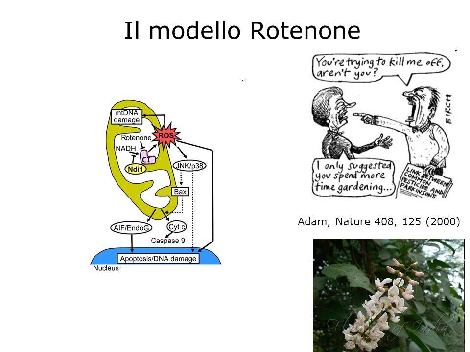 Il modello Rotenone Adam, Nature 408, 125 (2000)