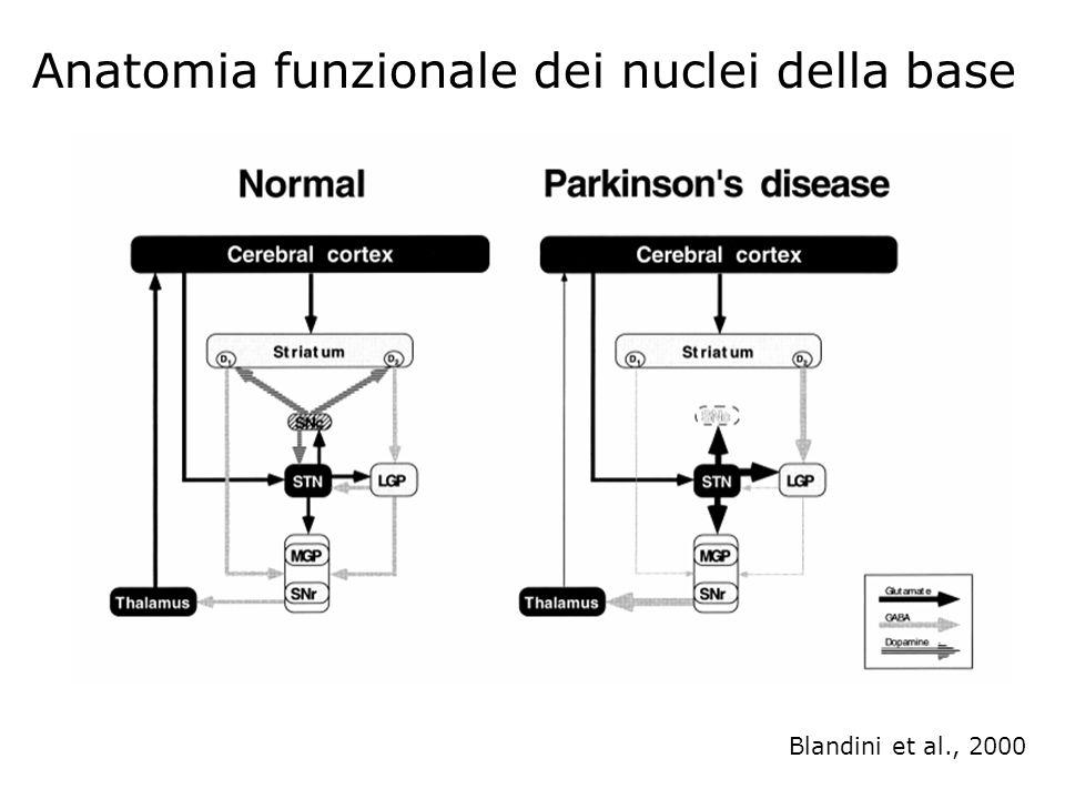 Anatomia funzionale dei nuclei della base Blandini et al., 2000