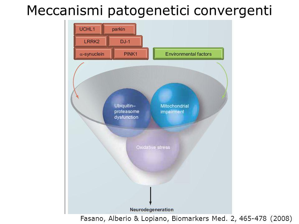 Meccanismi patogenetici convergenti Fasano, Alberio & Lopiano, Biomarkers Med. 2, 465-478 (2008)
