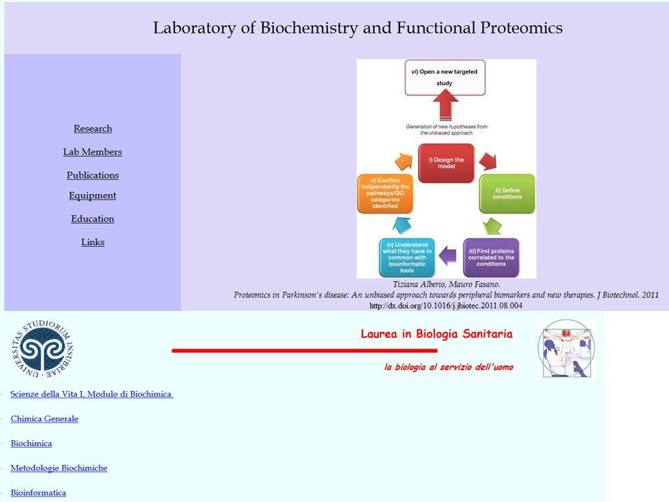 Argomenti del corso Introduzione alla Bioinformatica Banche dati Biologiche Allineamento di sequenze Ricerca di pattern e motivi funzionali Evoluzione molecolare Analisi strutturale delle proteine Modelli strutturali di proteine Analisi del genoma Analisi del trascrittoma e del proteoma Systems biology