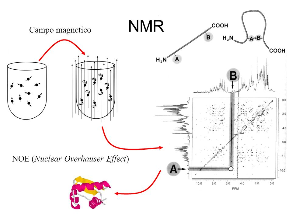 Campo magnetico NOE (Nuclear Overhauser Effect) NMR