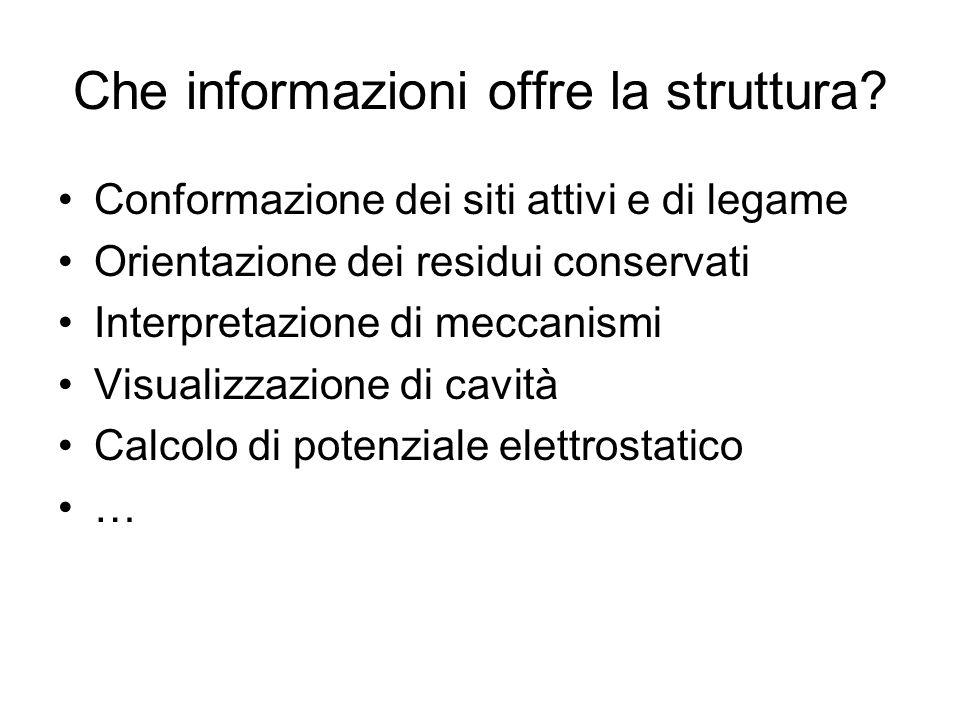 Che informazioni offre la struttura? Conformazione dei siti attivi e di legame Orientazione dei residui conservati Interpretazione di meccanismi Visua