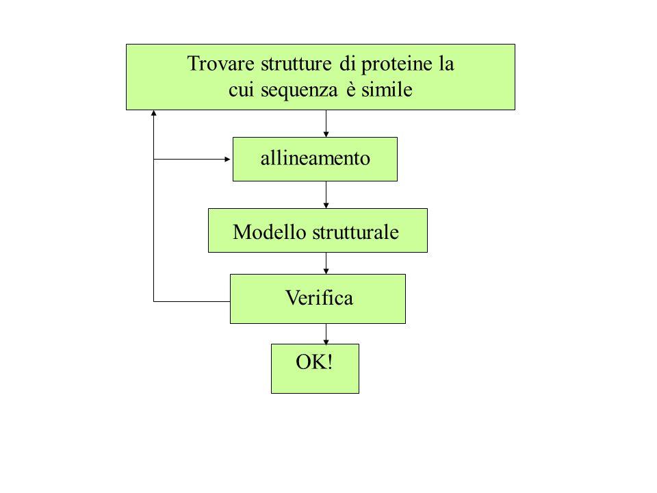 Trovare strutture di proteine la cui sequenza è simile allineamento Modello strutturale Verifica OK!