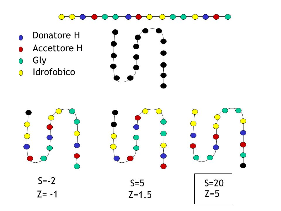 S=20S=5 S=-2 Z=5 Z=1.5 Z= -1 Donatore H Accettore H Gly Idrofobico