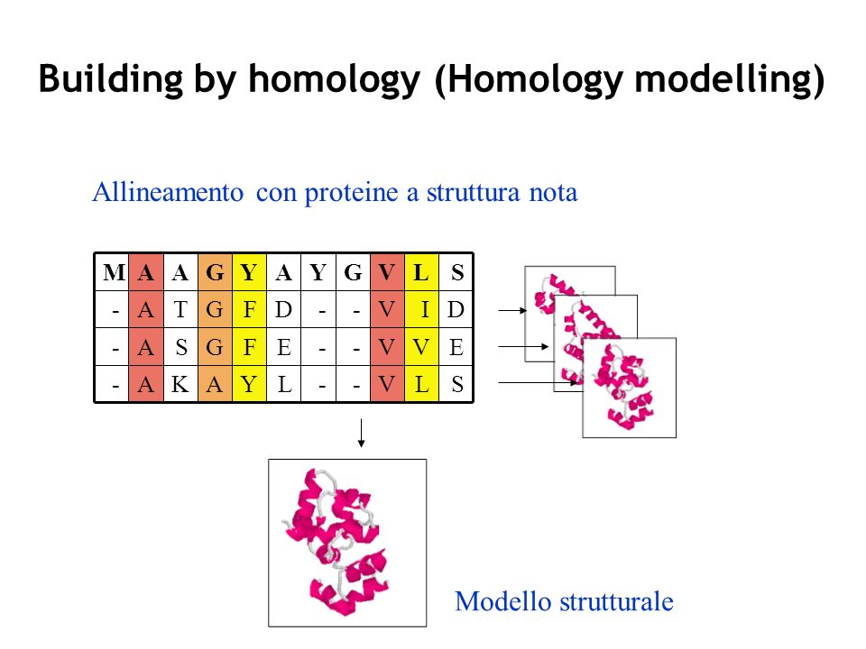 Building by homology (Homology modelling) - - - G - - - Y - - - M A A A A K S T A A G G G Y F F Y L E D A V V V V L V I L S E D S Allineamento con proteine a struttura nota Modello strutturale