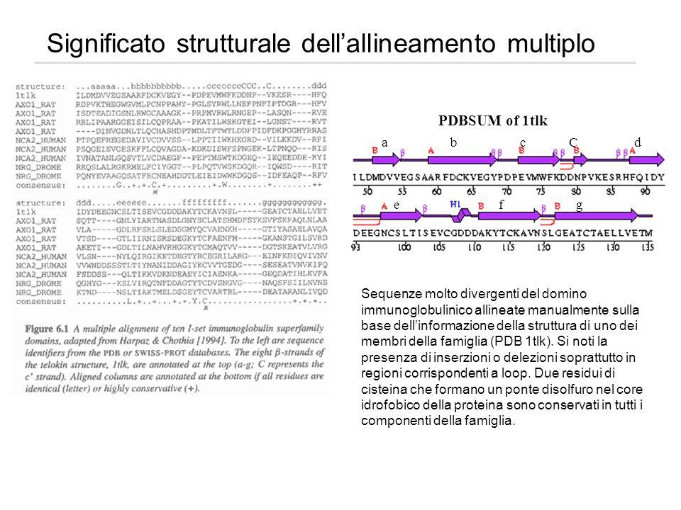 Significato strutturale dellallineamento multiplo PDBSUM of 1tlk e f g a b c C d Sequenze molto divergenti del domino immunoglobulinico allineate manu