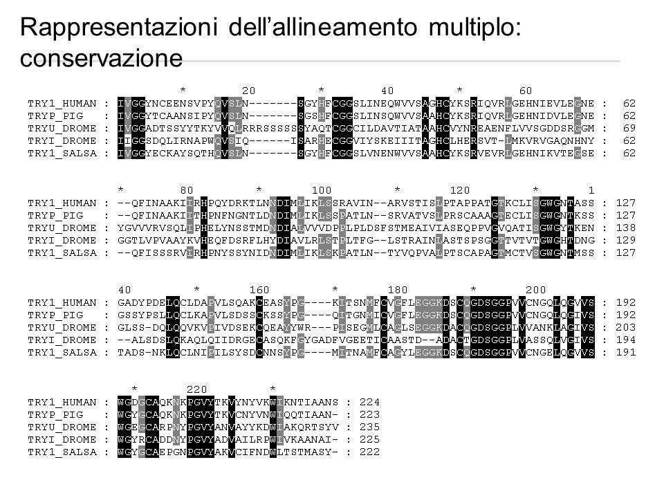 Rappresentazioni dellallineamento multiplo: conservazione