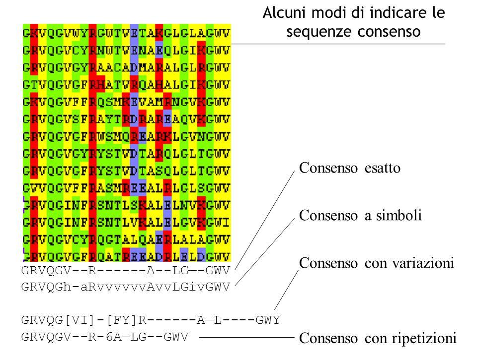 GRVQGV--R------A--LG-GWV GRVQGh-aRvvvvvvAvvLGivGWV GRVQG[VI]-[FY]R------AL----GWY GRVQGV--R-6ALG--GWV Consenso esatto Consenso a simboli Consenso con