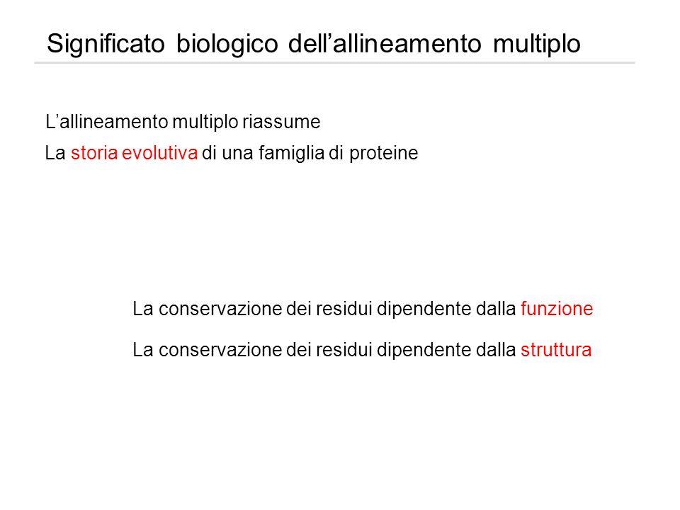 Significato biologico dellallineamento multiplo Lallineamento multiplo riassume La storia evolutiva di una famiglia di proteine La conservazione dei r