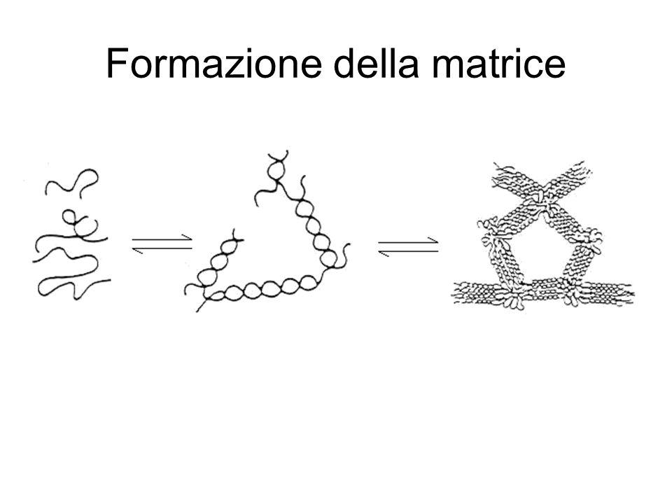 Formazione della matrice
