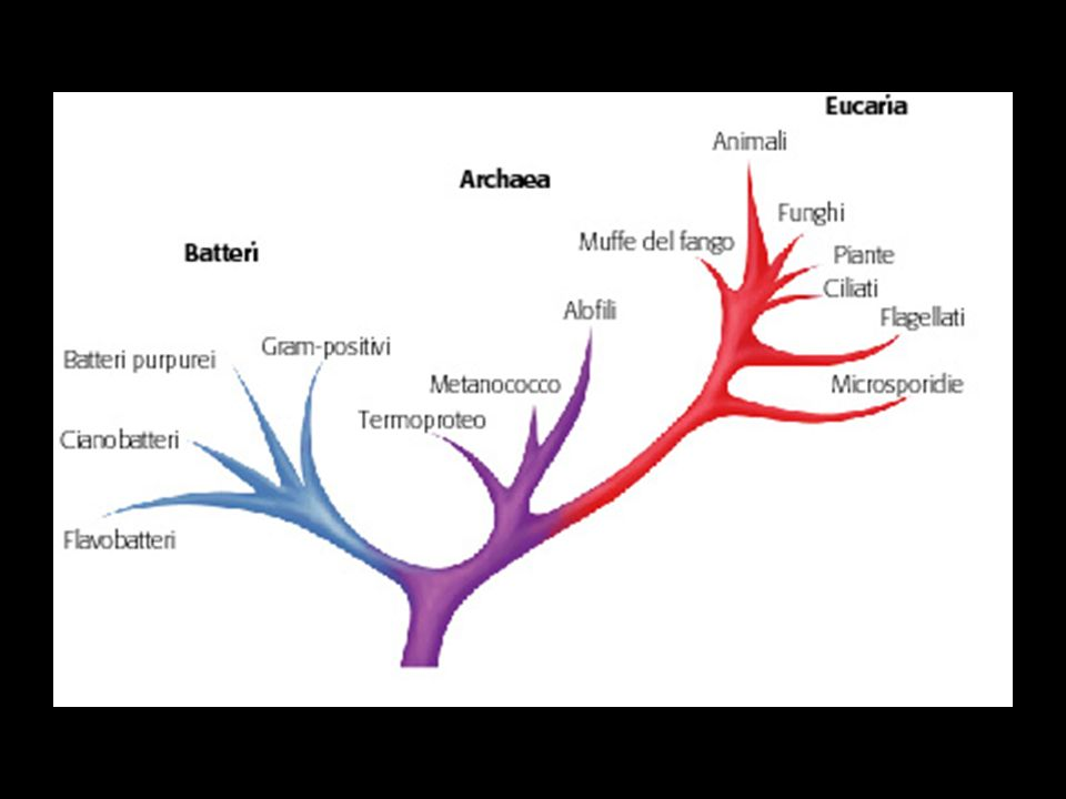 Come si evolvono gli organismi.