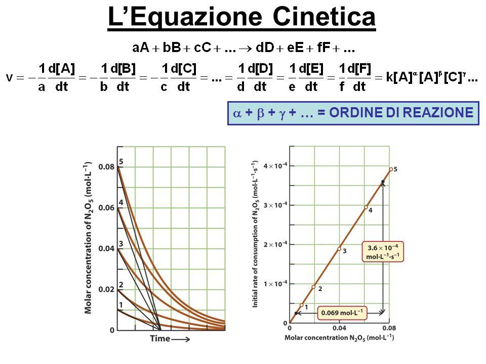 LEquazione Cinetica + + + … = ORDINE DI REAZIONE