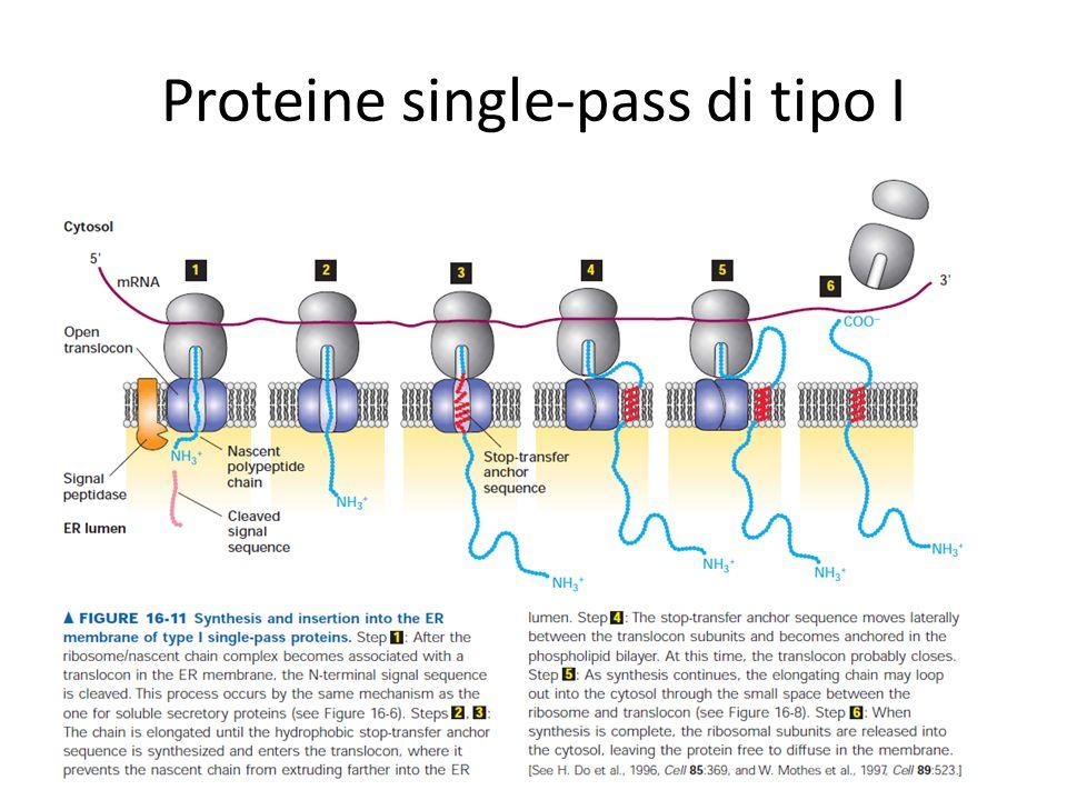 Proteine single-pass di tipo I