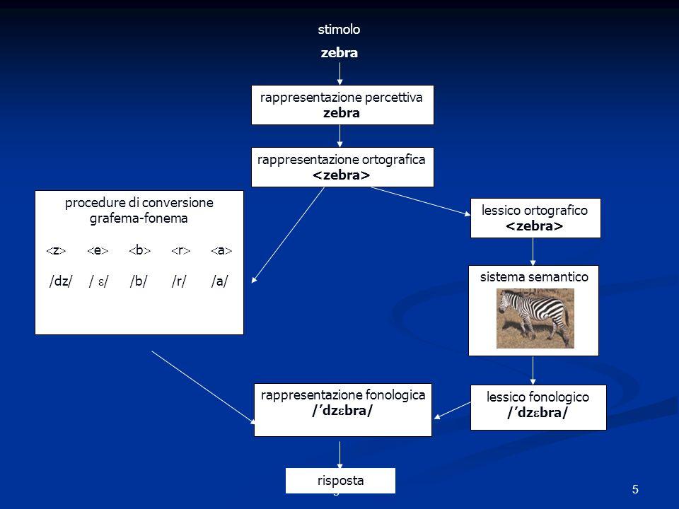 rappresentazione percettiva zebra rappresentazione ortografica procedure di conversione grafema-fonema z e b r a /dz/ / / /b/ /r/ /a/ lessico ortografico sistema semantico lessico fonologico /dz bra/ rappresentazione fonologica /dz bra/ risposta stimolo zebra 5Lucia Bigozzi 2008