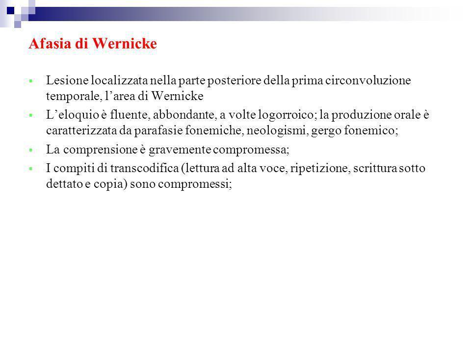 Afasia di Wernicke Lesione localizzata nella parte posteriore della prima circonvoluzione temporale, larea di Wernicke Leloquio è fluente, abbondante,