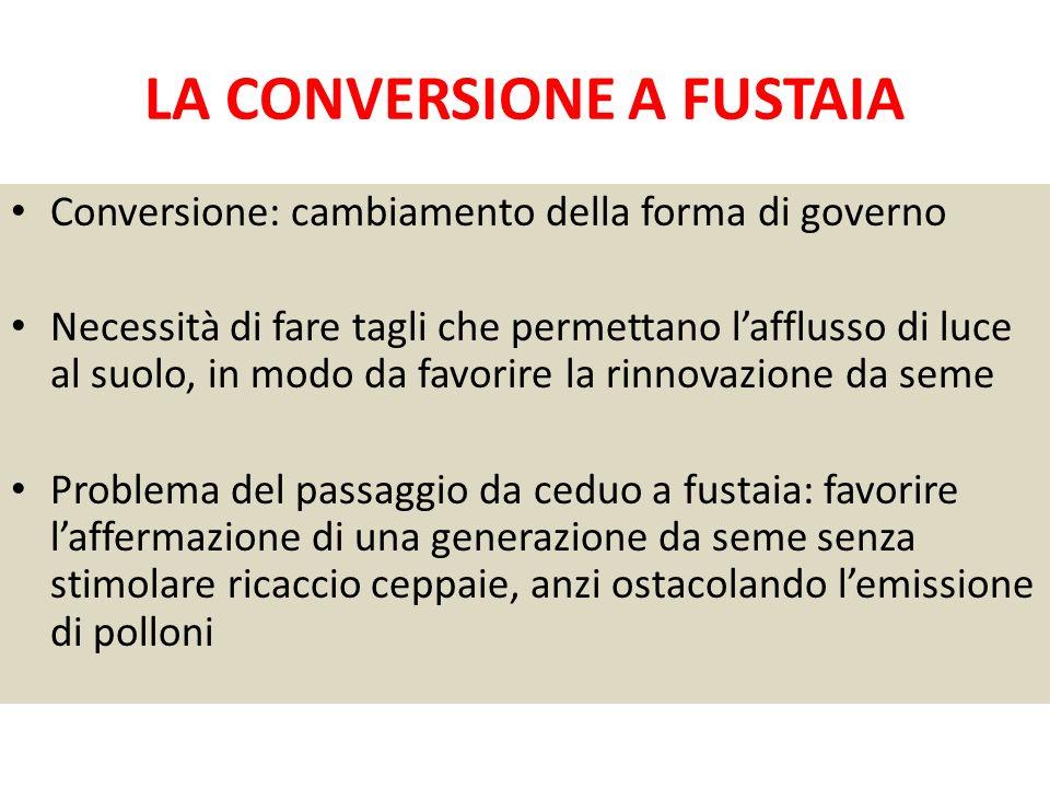 LA CONVERSIONE A FUSTAIA Conversione: cambiamento della forma di governo Necessità di fare tagli che permettano lafflusso di luce al suolo, in modo da