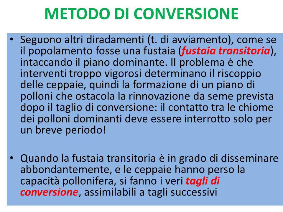 METODO DI CONVERSIONE Seguono altri diradamenti (t. di avviamento), come se il popolamento fosse una fustaia (fustaia transitoria), intaccando il pian