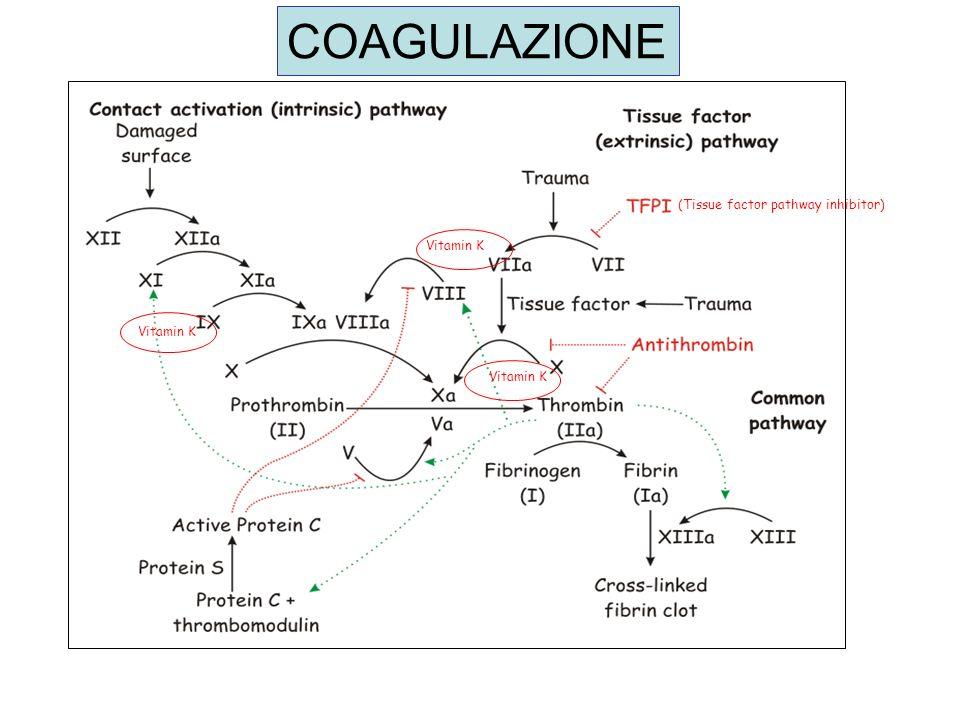 VITAMINA K Vitamina K e essenziale per la formazione di fattori di coagulazione Vitamina K = cofattore dellenzima carbossilasi, responsabile della -carbossilazione di residui di Glu dei cofattori