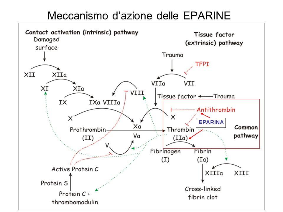 Meccanismo dazione delle EPARINE EPARINA