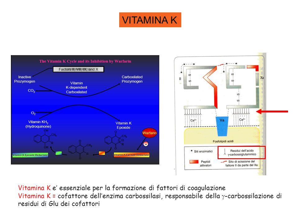 VITAMINA K Vitamina K e essenziale per la formazione di fattori di coagulazione Vitamina K = cofattore dellenzima carbossilasi, responsabile della -ca