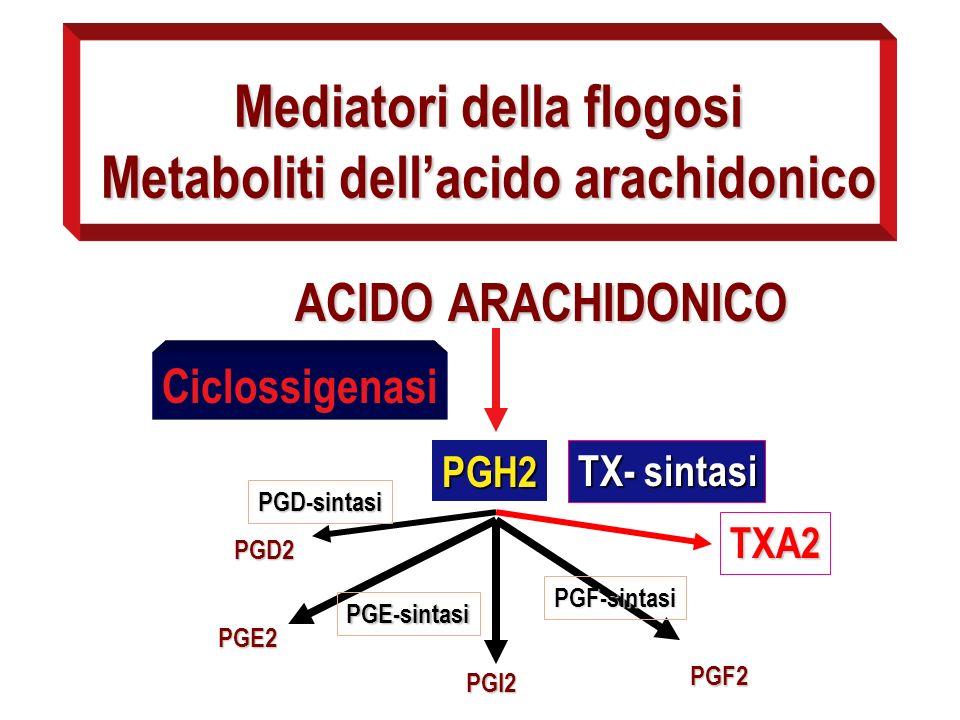 Mediatori della flogosi Metaboliti dellacido arachidonico ACIDO ARACHIDONICO Ciclossigenasi PGH2 PGD2 TXA2 TX- sintasi PGD-sintasi PGI2 PGF2 PGE2 PGF-