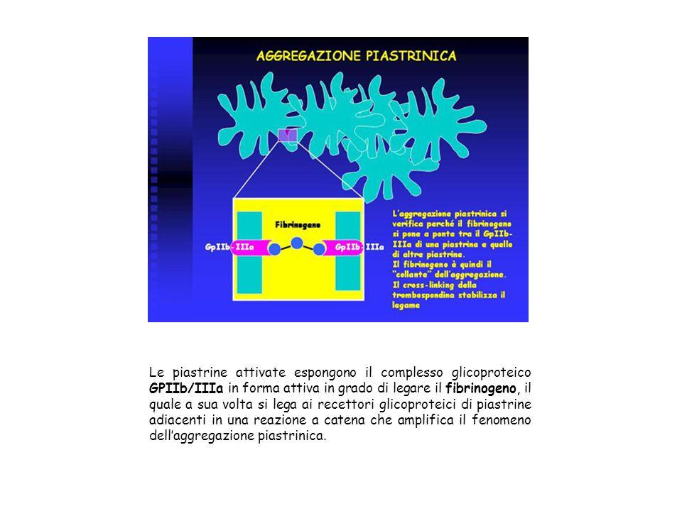 Le piastrine attivate espongono il complesso glicoproteico GPIIb/IIIa in forma attiva in grado di legare il fibrinogeno, il quale a sua volta si lega