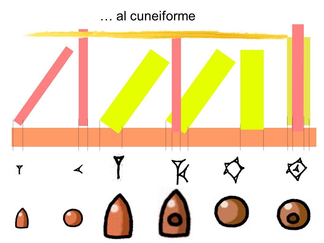 … al cuneiforme