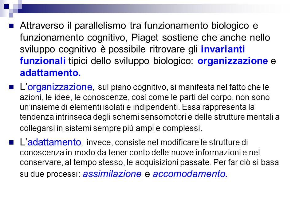 Attraverso il parallelismo tra funzionamento biologico e funzionamento cognitivo, Piaget sostiene che anche nello sviluppo cognitivo è possibile ritro