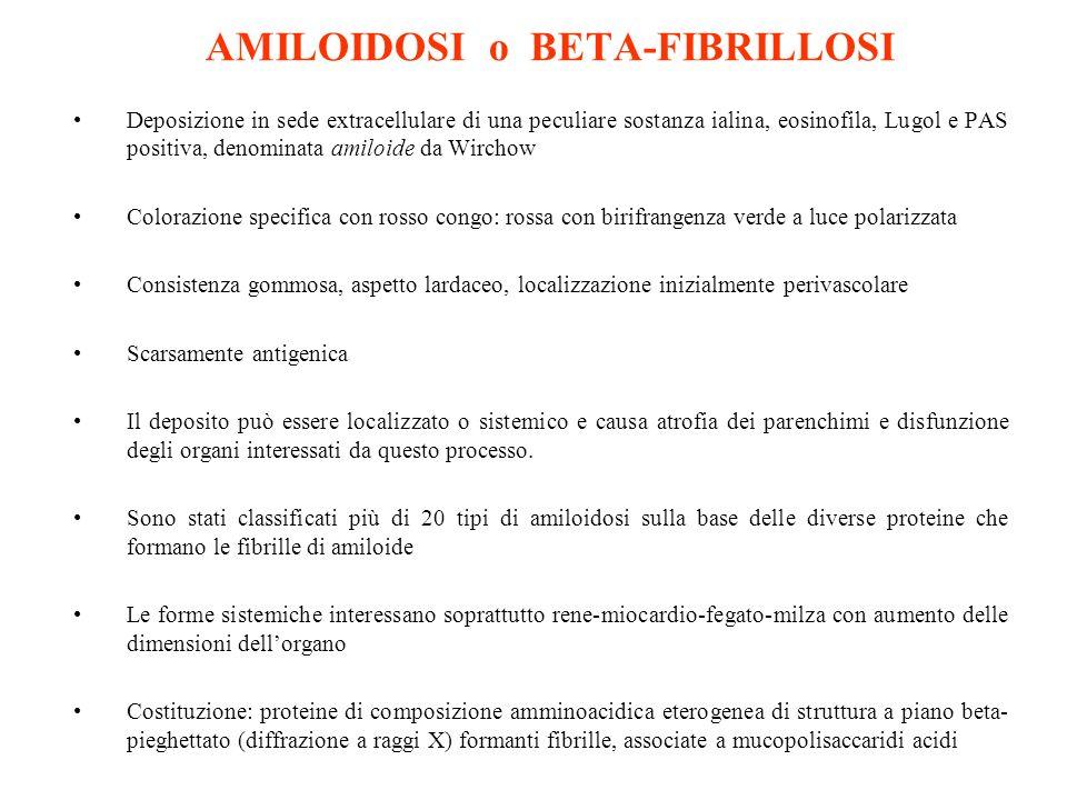 AMILOIDOSI o BETA-FIBRILLOSI Deposizione in sede extracellulare di una peculiare sostanza ialina, eosinofila, Lugol e PAS positiva, denominata amiloid