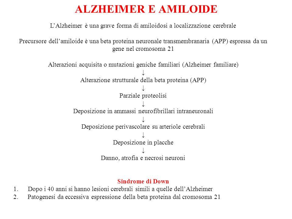 ALZHEIMER E AMILOIDE LAlzheimer è una grave forma di amiloidosi a localizzazione cerebrale Precursore dellamiloide è una beta proteina neuronale trans