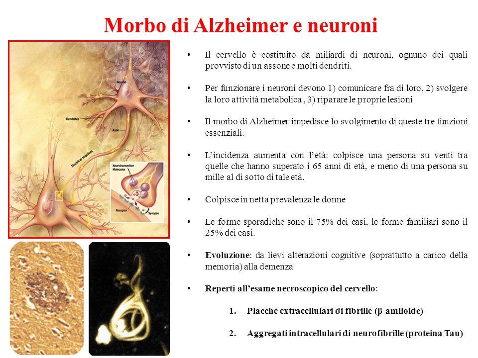 Morbo di Alzheimer e neuroni Il cervello è costituito da miliardi di neuroni, ognuno dei quali provvisto di un assone e molti dendriti. Per funzionare