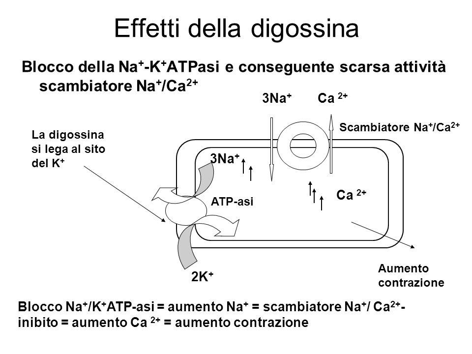 Effetti della digossina Blocco della Na + -K + ATPasi e conseguente scarsa attività scambiatore Na + /Ca 2+ ATP-asi Blocco Na + /K + ATP-asi = aumento