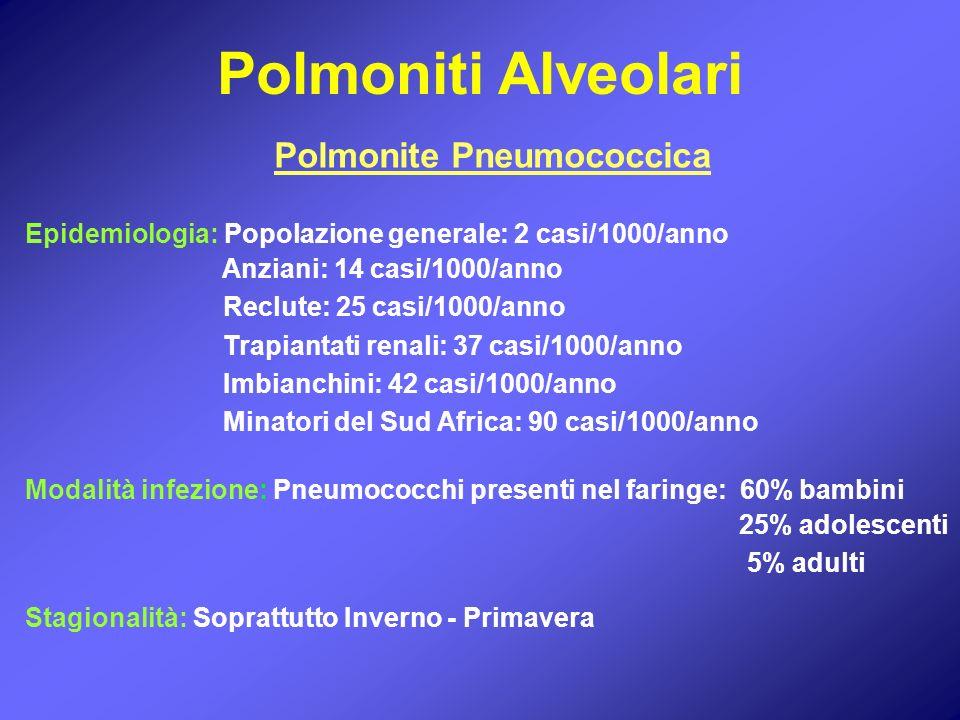 Polmoniti Alveolari Polmonite Pneumococcica Epidemiologia: Popolazione generale: 2 casi/1000/anno Anziani: 14 casi/1000/anno Reclute: 25 casi/1000/ann