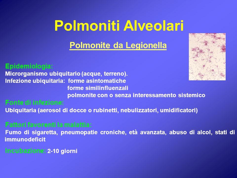 Epidemiologia: Microrganismo ubiquitario (acque, terreno). Infezione ubiquitaria: forme asintomatiche forme similinfluenzali polmonite con o senza int