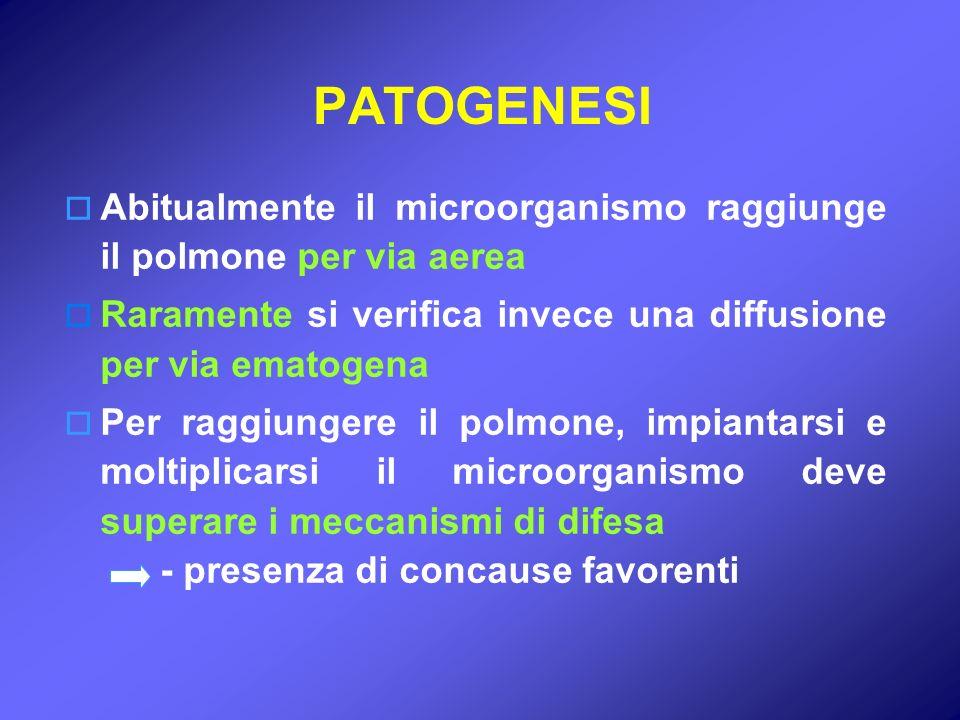 PATOGENESI Abitualmente il microorganismo raggiunge il polmone per via aerea Raramente si verifica invece una diffusione per via ematogena Per raggiun