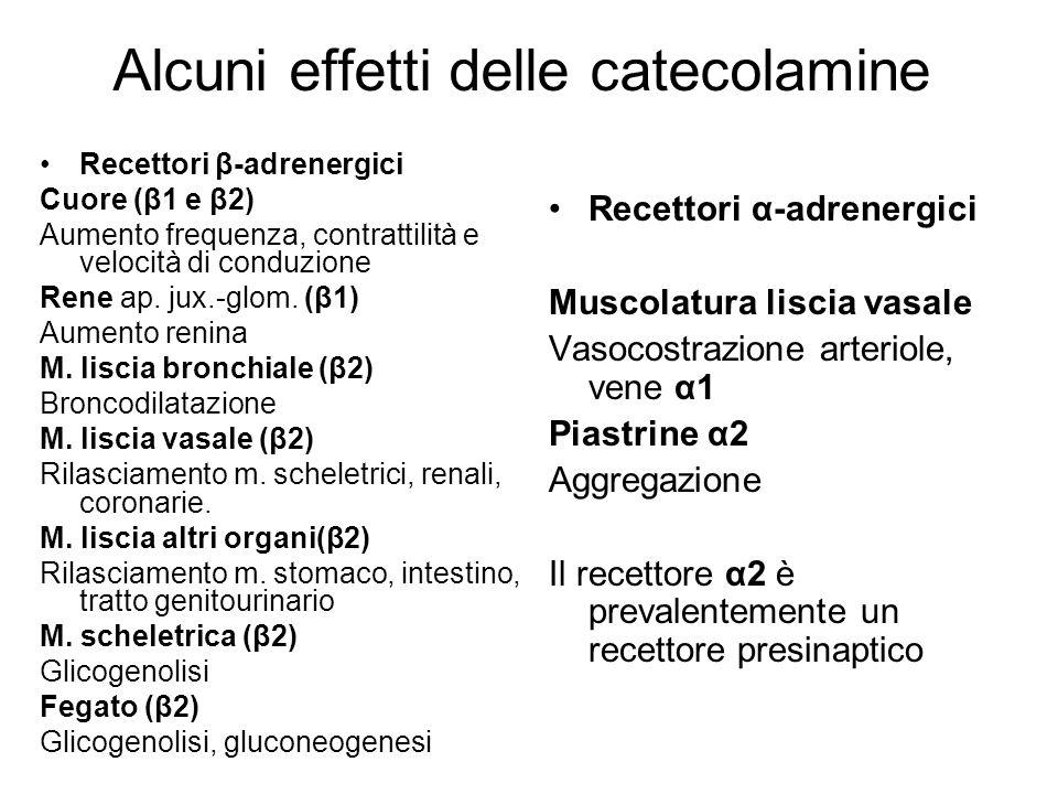 Alcuni effetti delle catecolamine Recettori β-adrenergici Cuore (β1 e β2) Aumento frequenza, contrattilità e velocità di conduzione Rene ap. jux.-glom