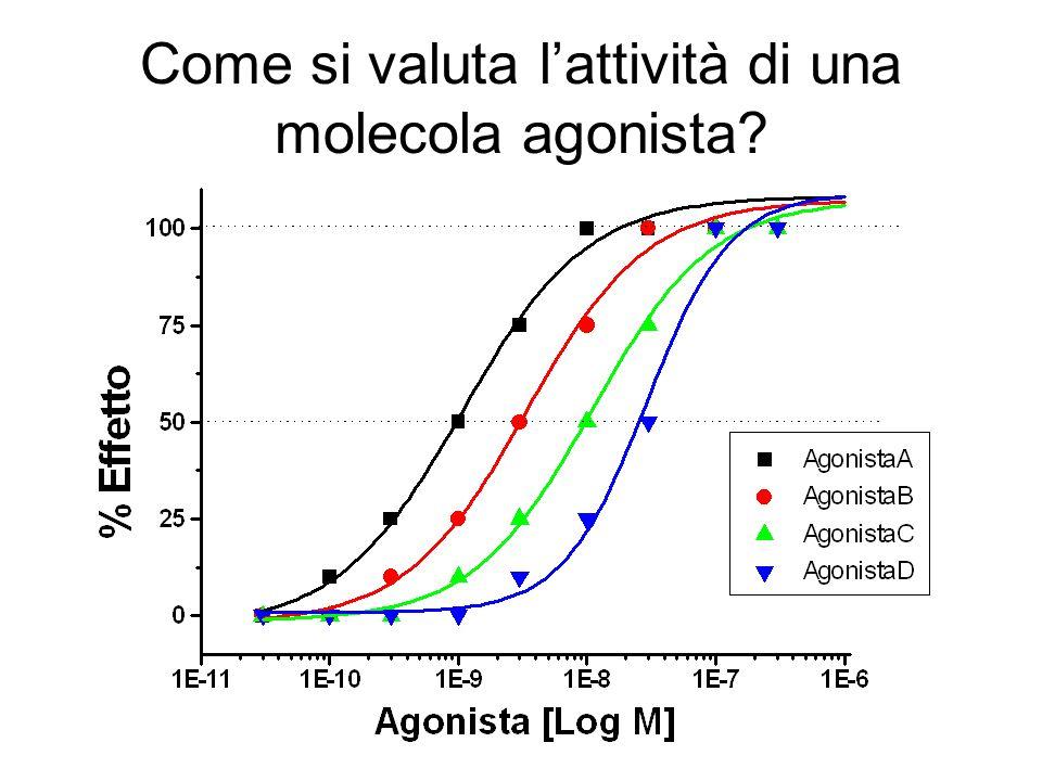 Come si valuta lattività di una molecola agonista?