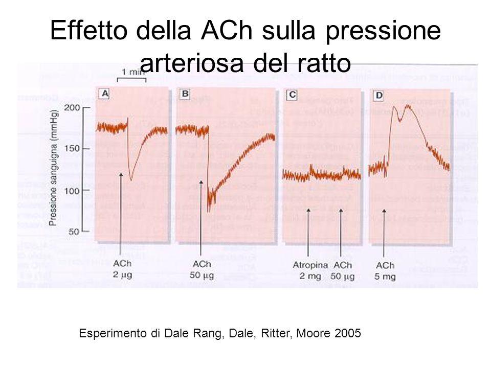 Esperimento di Dale Rang, Dale, Ritter, Moore 2005 Effetto della ACh sulla pressione arteriosa del ratto