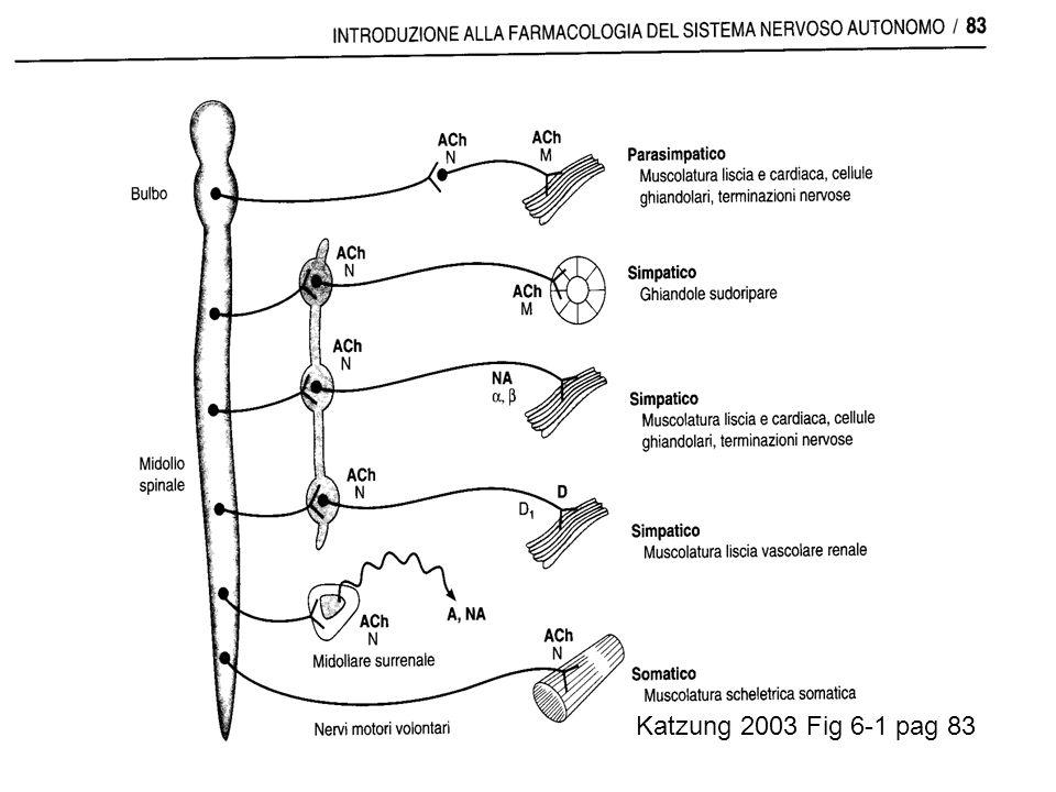 Katzung 2003 Fig 6-1 pag 83