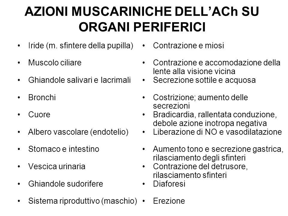 AZIONI MUSCARINICHE DELLACh SU ORGANI PERIFERICI Iride (m. sfintere della pupilla) Muscolo ciliare Ghiandole salivari e lacrimali Bronchi Cuore Albero